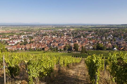 Route des vins d'alsace, Barr capital viticole