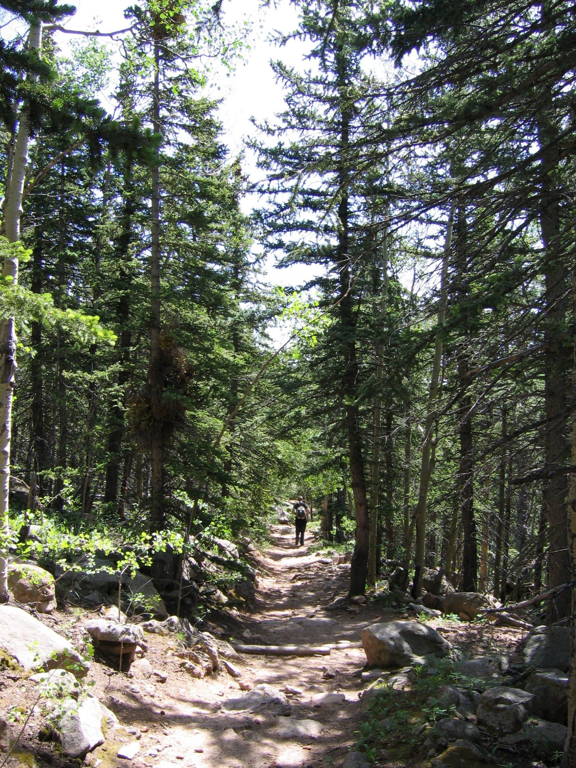 Barr terrain forestier idéale pour les visiteurs